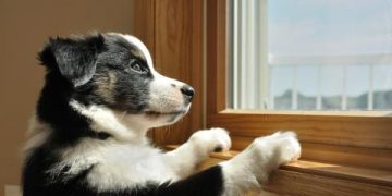 pets and security systems